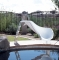 Interfab Zoomerang Right Turn Pool Slide - White